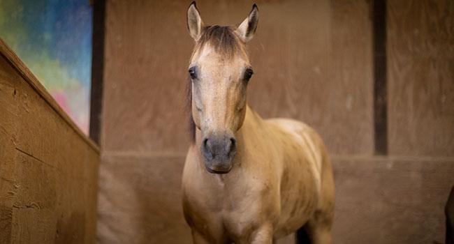 Grécia: Não será mais possível comer carne de cavalo 7