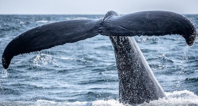 O apelo de 300 especialistas internacionais em cetáceos: salvá-los significa salvar a nós também 9