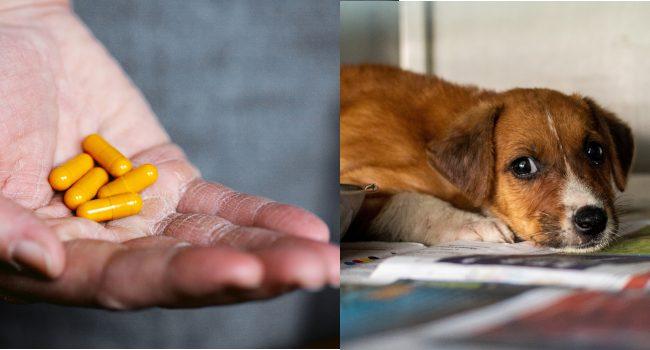 Farmaci umani equivalenti agli animali domestici: legge approvata ma attenzione al fai da te