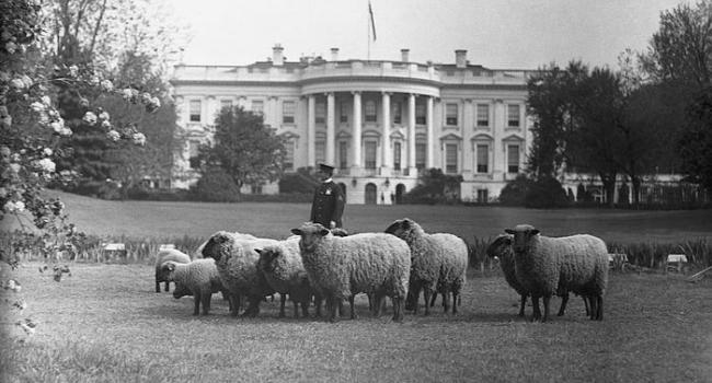 I compagni a quattro zampe dei presidenti americani_ in Maryland c'è un museo tutto per loro