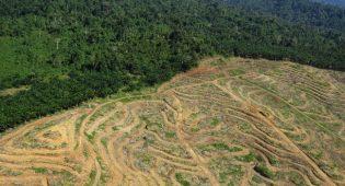 Deforestazione, l'Europa (e l'Italia) tra i primi responsabili della distruzione degli ecosistemi