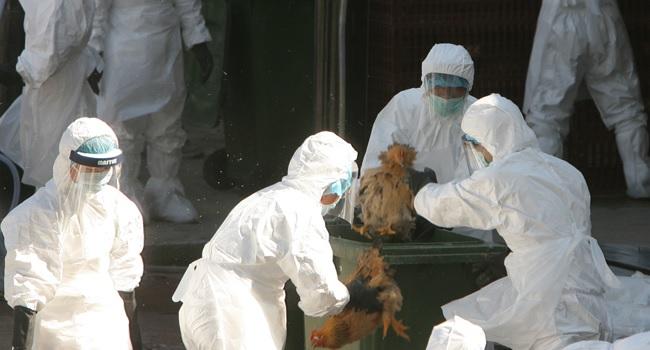 Il trattamento dell'aviaria in Cina