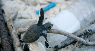 """Plastica, nuovo report Wwf: """"Effetto Covid, rischiamo un'epidemia di plastica"""""""