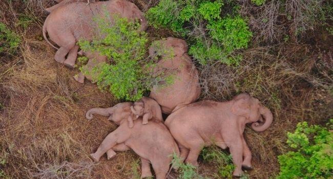 Elefanti a riposo lungo il tragitto.